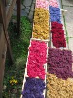 pflanzengefärbte Rohwolle