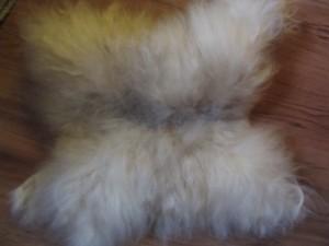 KF02 Mittelgroßes weißes Fell : 20,00€